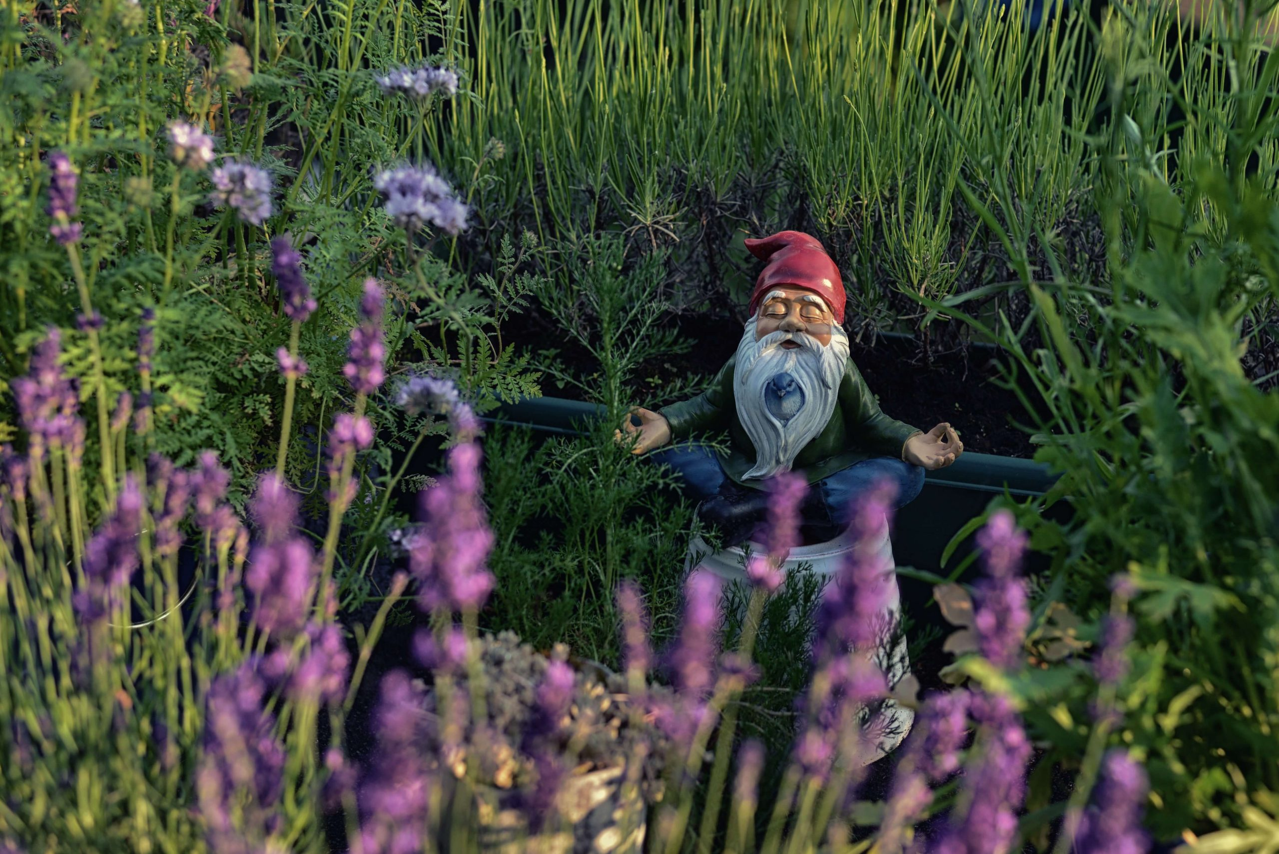 gnome in the flowers